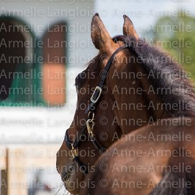 cheval-ambiance-150201-5166