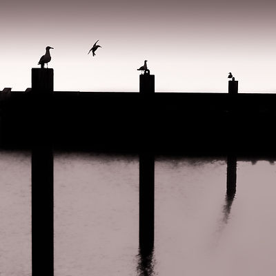 Four Gulls | West Bay | 2015