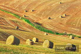 Hay ball on mown meadow - Europe, Italy, Tuscany, Siena, Val d'Orcia, Pienza, Terrapille - digital - Corbis image 42-23618638