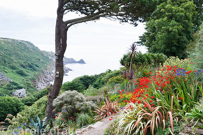 View down into Lamorna Cove from Chygurno, planted with phormiums, Crocosmia 'Lucifer', agapanthus, cordylines and succulents.