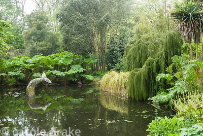 Whale's tail sculpture in the pond surrounded by Gunnera manicata, restios, cabbage palms, Cordyline australis, and weeping L...