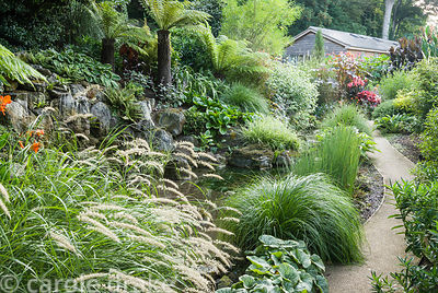 Path runs past a small pond surrounded with foliage planting including tree ferns, pennisetum, ferns, hostas and silvery plec...