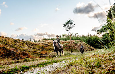 Danish women riding horses in Thy woods, Denmark 11