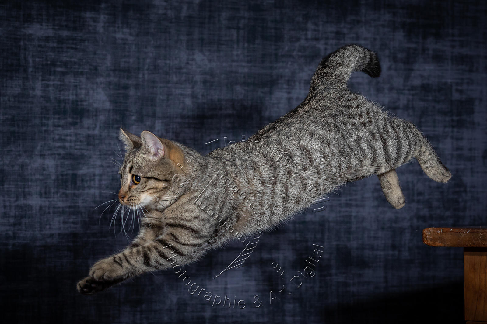 Photographie-Alain-Thimmesch-Chat-1096
