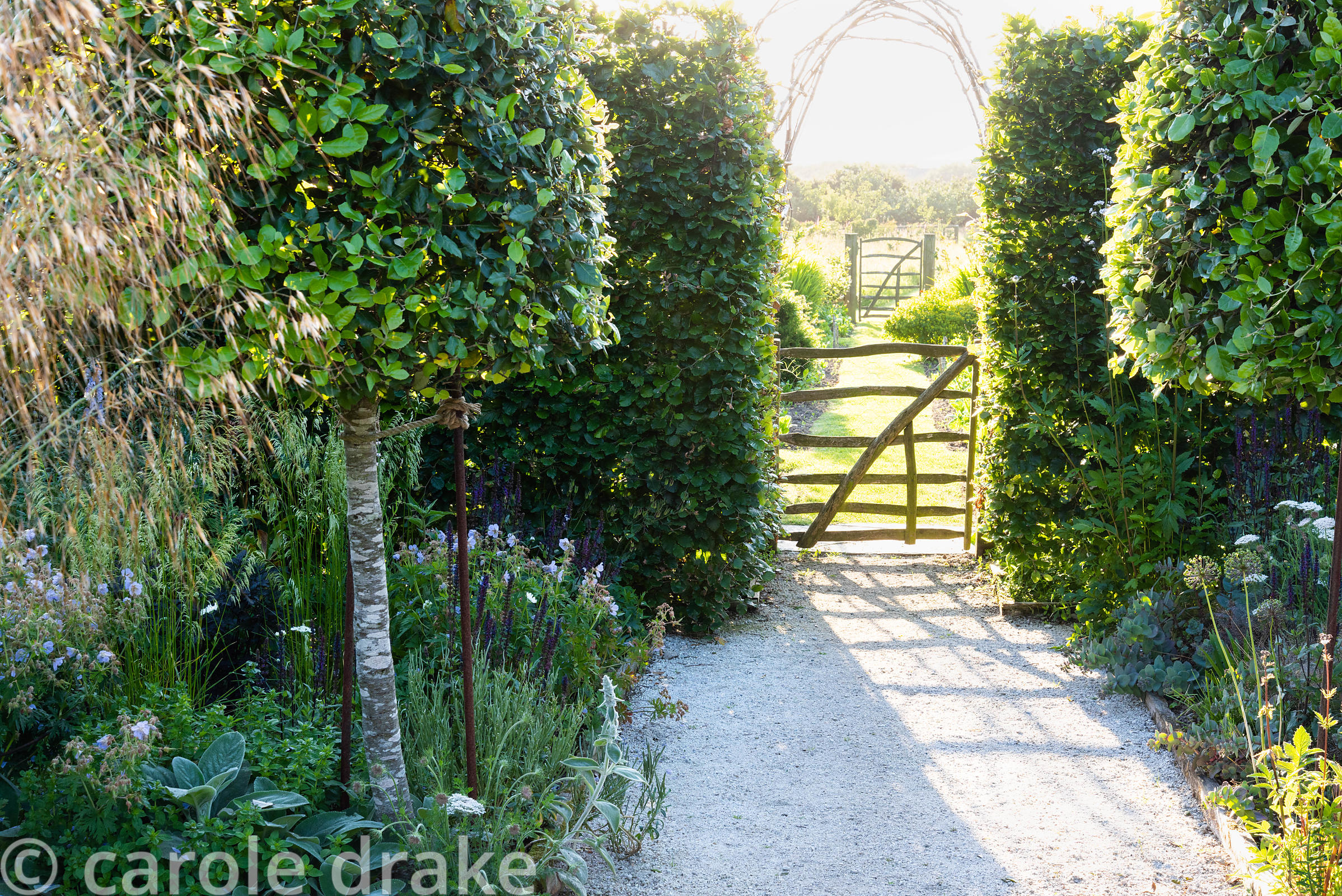 A pair of holm oaks frames a simple paling gate leading from the ornamental garden planted with salvias, geraniums and Stipa ...