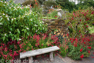 Bench surrounded by hot colours of penstemons, antirrhinums, dahlias and callistemon with white flowered Impatiens tinctoria....