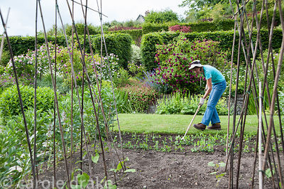 Liz Eaton hoeing. Liz is the leading light in the non-profit Community Interest venture that runs the garden. Littlebredy Wal...