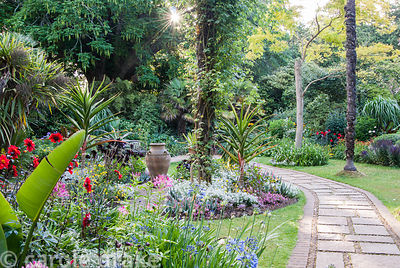 The Victorian garden features tall Chusan palms, Trachycarpus fortunei, yellow Robinia pseudoacacia 'Frisia', and bedding com...
