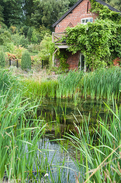 Wildlife pond surrounded by grasses and bulrushes with wisteria covered barn beyond. Rhodds Farm, Kington, Herefordshire, UK