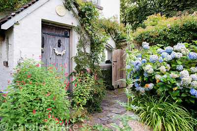 Door framed with red salvias, blue hydrangeas and orange hemerocallis at Five Oaks Cottage in July