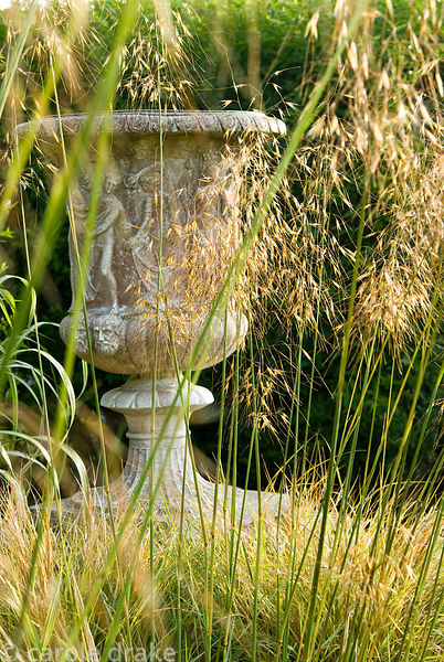 Urns surrounded by airy grasses including Stipa gigantea. Ednovean Farm, Marazion, Cornwall, UK