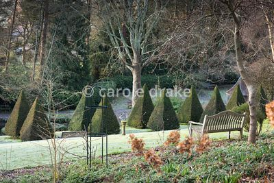 A bench on a slope above an avenue of yew pyramids at the Old Rectory, Netherbury in January