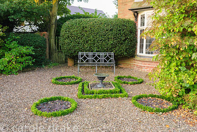 Knot garden replanted with Euonymus japonicus 'Microphyllus' to replace diseased box
