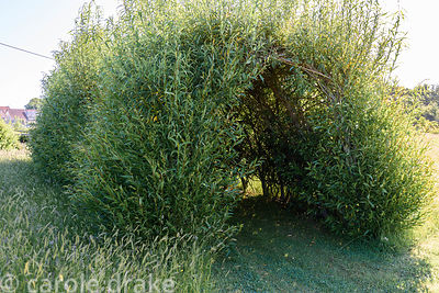 Willow tunnel at Malthouse Farm, Hassocks, Sussex