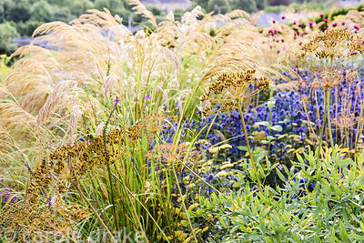 Seedheads in front of Eryngium bourgatii 'Picos Blue' and Stipa calamagrostis at Dove Cottage Nursery & Garden, Halifax, West...