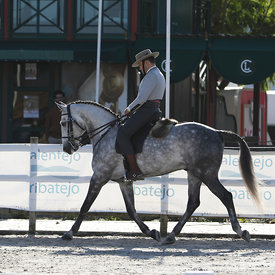 Working Equitation Dressage