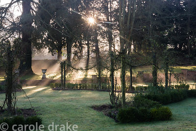 Low winter sun illuminates the Rose Garden to the south of the house, dominated by tall junipers underplanted with lavender, ...