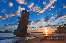 Ocean impression at Te Hoho Rock - Oceania, New Zealand, North Island, Waikato, Coromandel, Hahei, Cathedral Cove (Polynesia)...