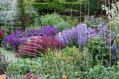 String wound around metal stakes and bamboo canes provides support for growing perennials including dahlias in a border at Ma...