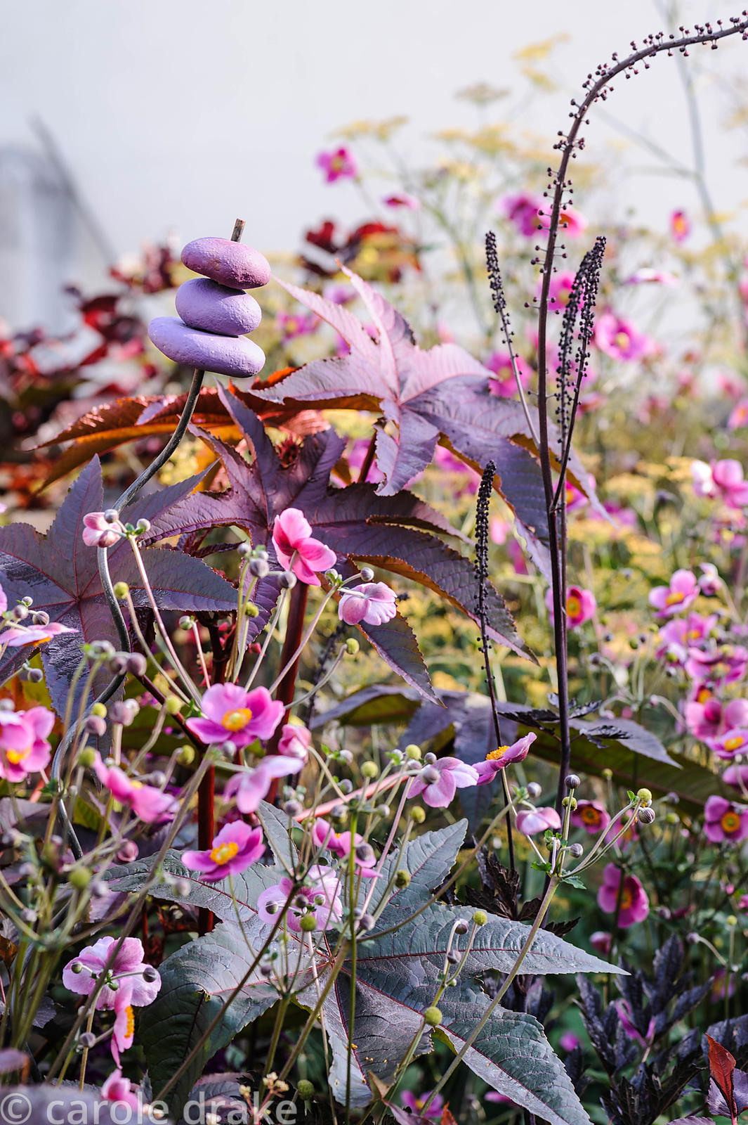 Planting in a small courtyard area is dominated by purple leaved plants including Ricinus communis 'Carmencita', actaea and p...