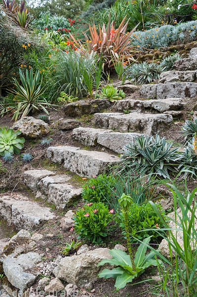 Celmisias, eucomis, phormiums and succulents line stone steps leading down the steeply sloping garden