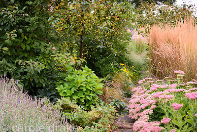 A narrow path between densely planted borders including sedums, Calamagrostis x acutiflora 'Karl Foerster', rudbeckias and a ...