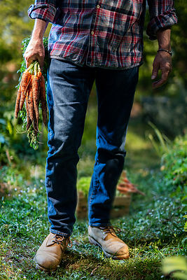 farmer worker hands with organic homegrown harvest of carrots