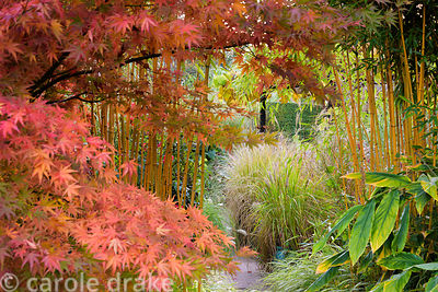 Acer palmatum and Phyllostachys aureosulcata f. spectabilis create a frame into the sunken garden filled with grasses at Barn...