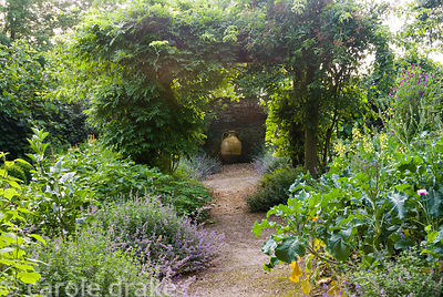 Formal vegetable garden featuring soft mounds of catmint, nepeta. Corscombe House, Corscombe, Dorset, UK