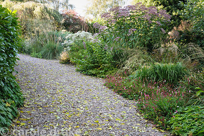 Gravel garden along one side of the drive features Selinum wallichianum, Eupatorium maculatum (Atropurpureum Group) 'Gateway'...