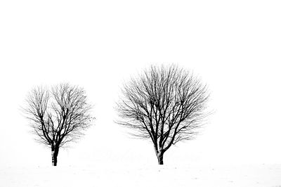 Minimalisme hivernal 3 Ennery Val d'Oise 01/19