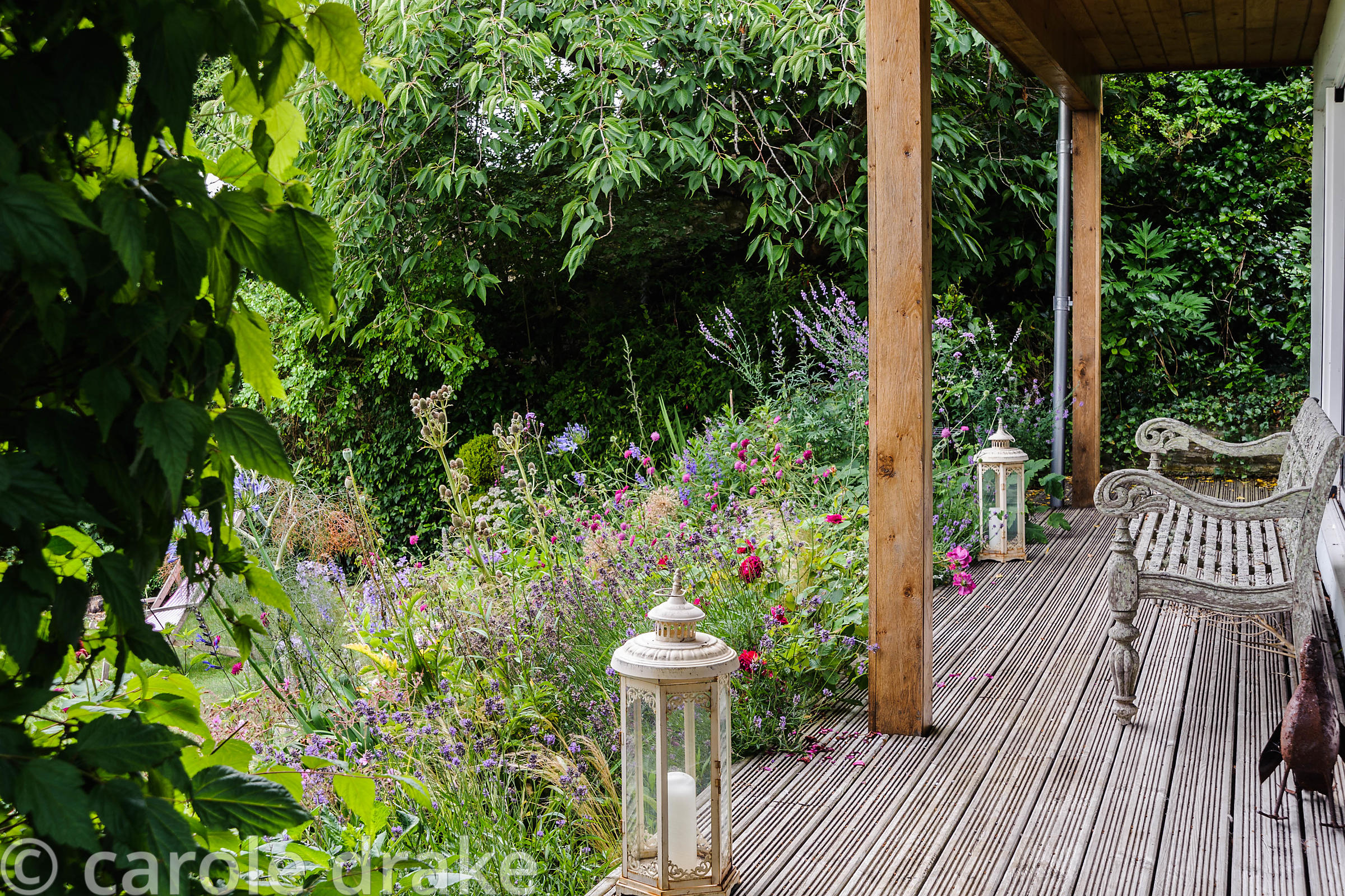 Deck with lanterns and bench edged with border full of herbaceous planting in shades of pink, blue and purple including knaut...