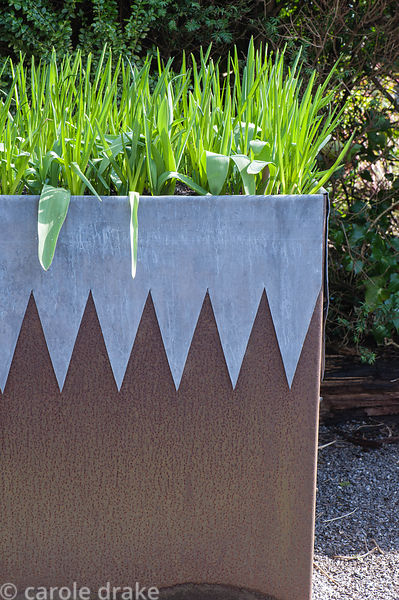 A square steel planter with decorative lead 'collar' full of bulb foliage in a formal garden.