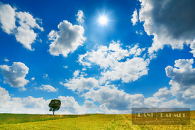 Corn field and cumulonimbus clouds - Europe, Germany, Bavaria, Upper Bavaria, Freising, Giggenhausen - digital - Getty image ...