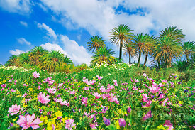 Palm grove with common mallows and Bermuda buttercups - Europe, Greece, Crete, Lasithi, Palekastro, Vai Beach - digital