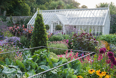 Vegetables and ornamentals are grown in the walled garden, a luscious mix here of cabbages, penstemons, dahlias and rudbeckia...