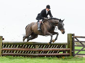 William Bell jumping a fence at Stone Lodge. The Cottesmore Hunt at Vickers Farm 12/3