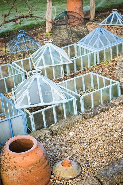 Glass cloches in the formal vegetable garden at the Old Rectory, Netherbury in January