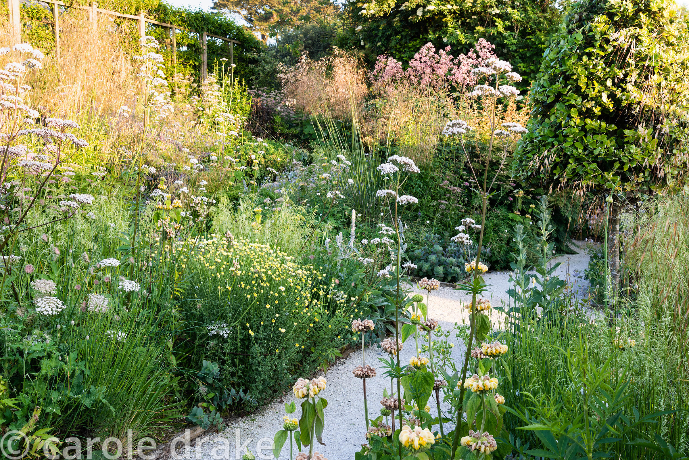 Densely planted borders including grasses Deschampsia caespitosa 'Goldschlier and Stipa gigantea, and herbaceous perennials P...
