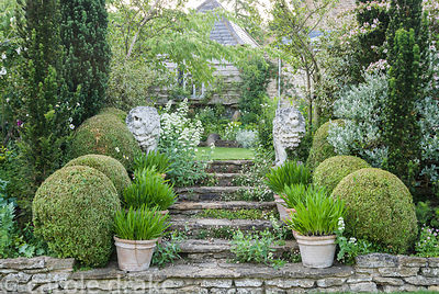 Stone steps colonised with wall daisy, Erigeron karvinskianus, and framed with fastigiate yew, clipped box, pots of agapanthu...
