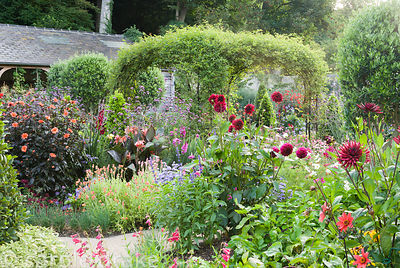 Standard olives and rose arch clad with Rosa banksiae surrounded by exuberant planting including dahlias, penstemons, osteosp...