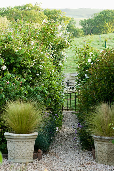Pots of Stipa tenuissima frame a path to surrounding fields. Old Rectory, Kingston, Isle of Wight, Hants, UK