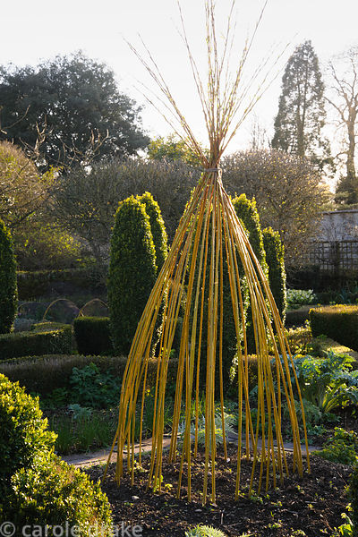 Evening sun illuminates a striking yellow wigwam of willow stems in the potager at Barnsley House, Cirencester, Glos, UK