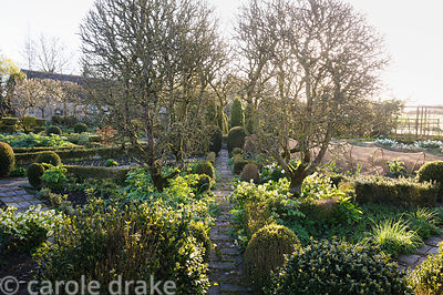 Goblet trained apple trees frame a path in the potager edged with clipped box, hellebores and narcissi. Barnsley House, Ciren...