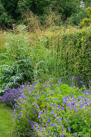 The Spring and Summer Box Borders at Scampston Hall Walled Garden, North Yorkshire, designed by Piet Oudolf. Perennial planti...
