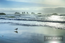 Ocean impression high fog and gull at Bandon Beach - North America, USA, Oregon, Coos, Bandon, Bandon Beach - digital