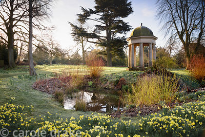 Temple of the Four Winds surrounded by naturalised daffodils and the bright stems of cornus and willow at Doddington Hall, Li...