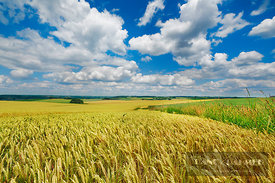 Barley field and cumulonimbus clouds (lat. hordeum vulgare) - Europe, Germany, Bavaria, Upper Bavaria, Freising, Giggenhausen...
