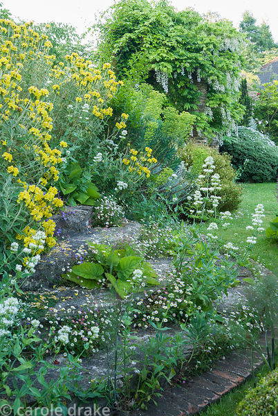 Steps framed by Phlomis fruticosa and seeded with masses of wall daisy, Erigeron karvinskianus and Centranthus ruber albus, w...