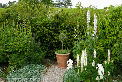 Pond garden features pots of standard olives underplanted with Origanum 'Kent Beauty', white Lupin 'Noble Maiden', delphinium...
